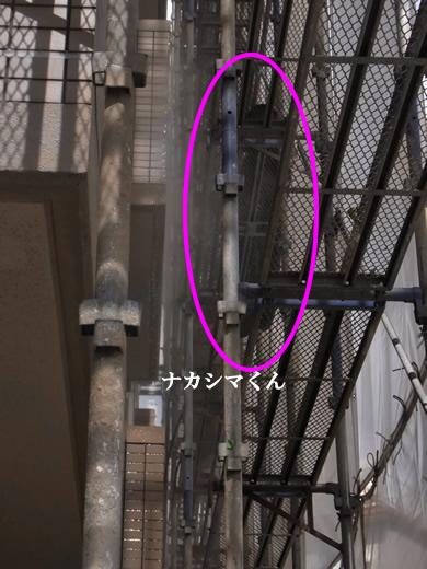 福岡 賃貸 高圧洗浄�A.jpg